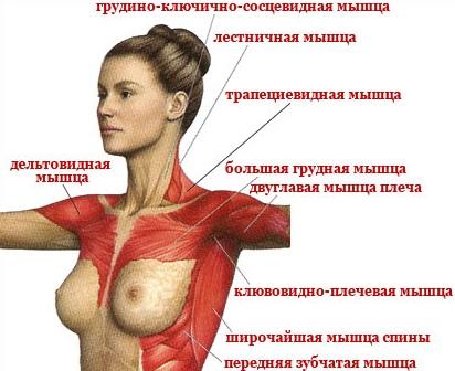 Плюсы увеличивать грудь